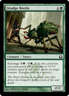 Drudge Beetle