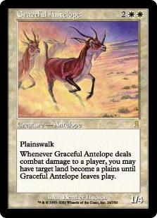 Graceful Antelope